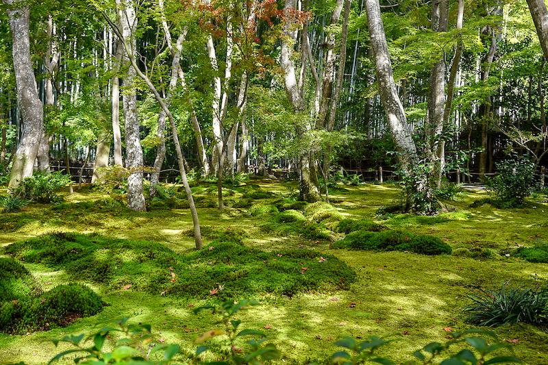 Wabi-sabi example Japan moss garden image
