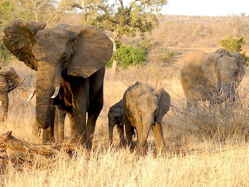 Singita Lebombo elephants image